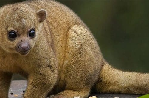 Rehabilitación de Martucha, una especie en extinción