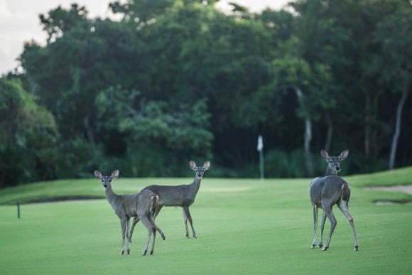 ecoistas golf