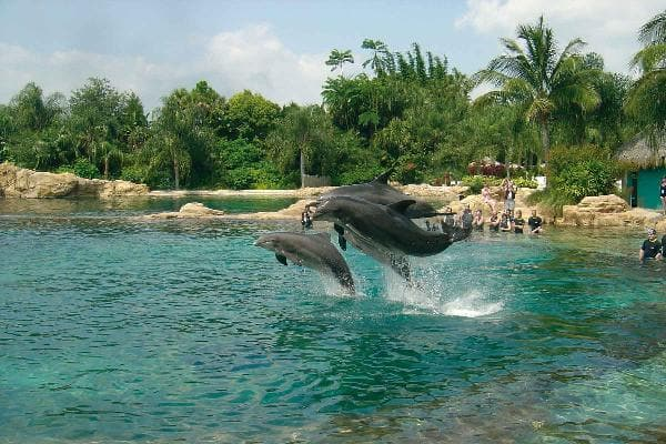 Dolphin Cove at Jamaica 1